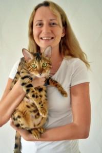 bengal kittens gelderland