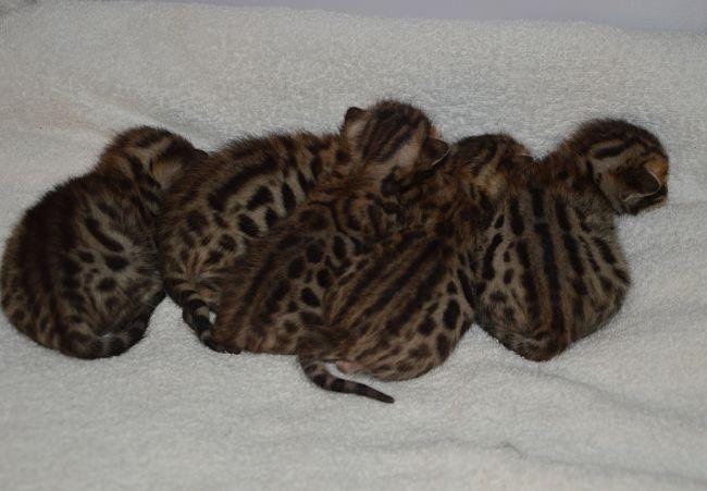 5 healthy kittens